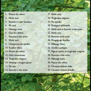 Forêts v1 – extrait 4